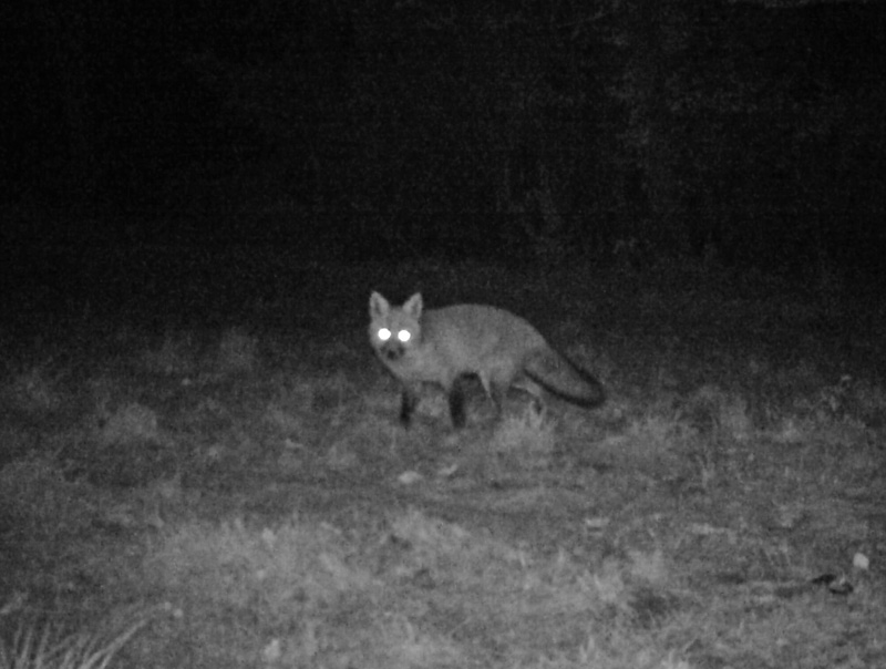More nocturnal goings on - Click here to view this news entry